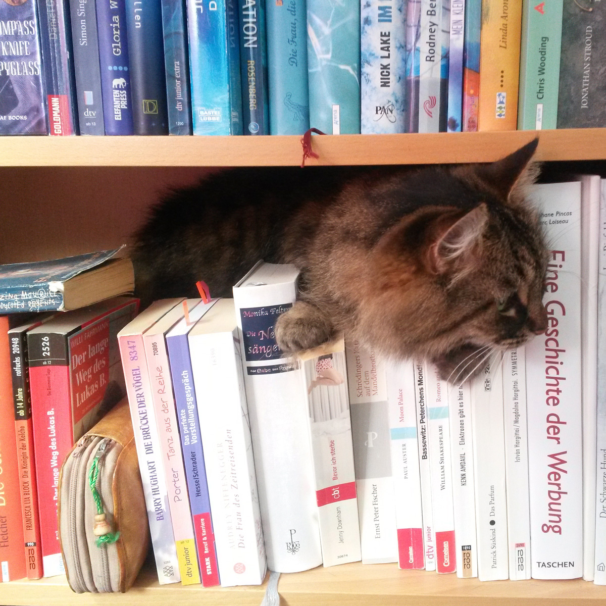 Photograph books and cat